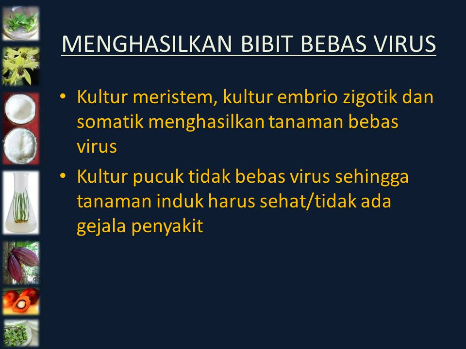 MENGHASILKAN BIBIT BEBAS VIRUS