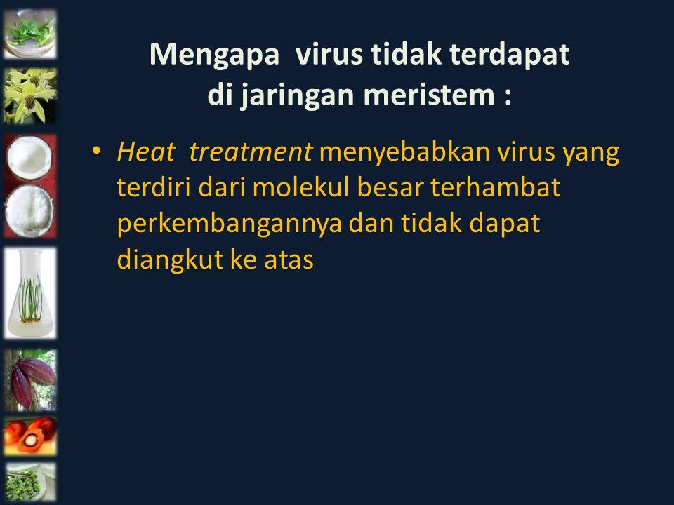 Mengapa virus tidak terdapat di jaringan meristem :