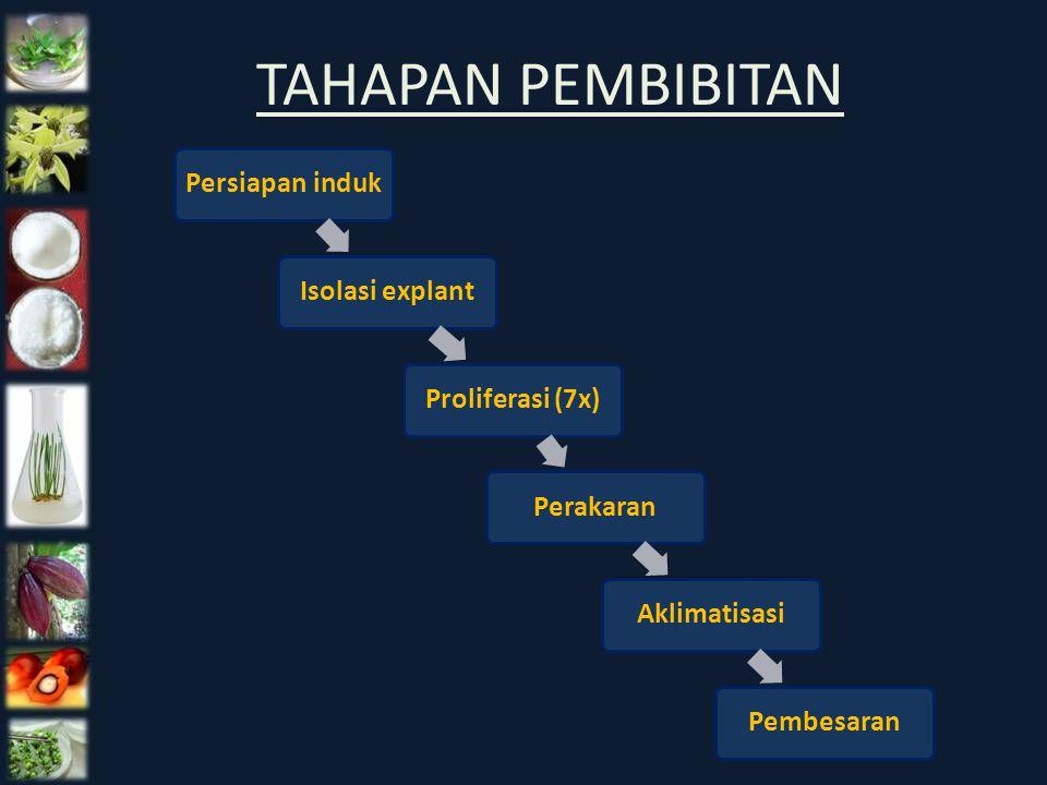TAHAPAN PEMBIBITAN Persiapan induk Isolasi explant Proliferasi (7x)