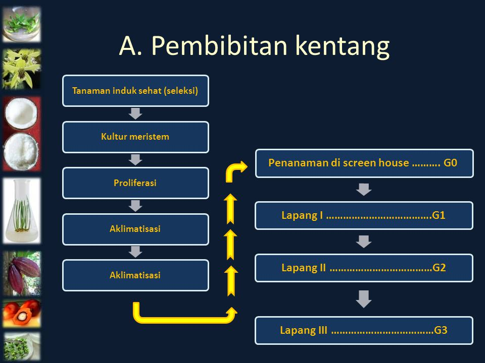 A. Pembibitan kentang Penanaman di screen house ………. G0