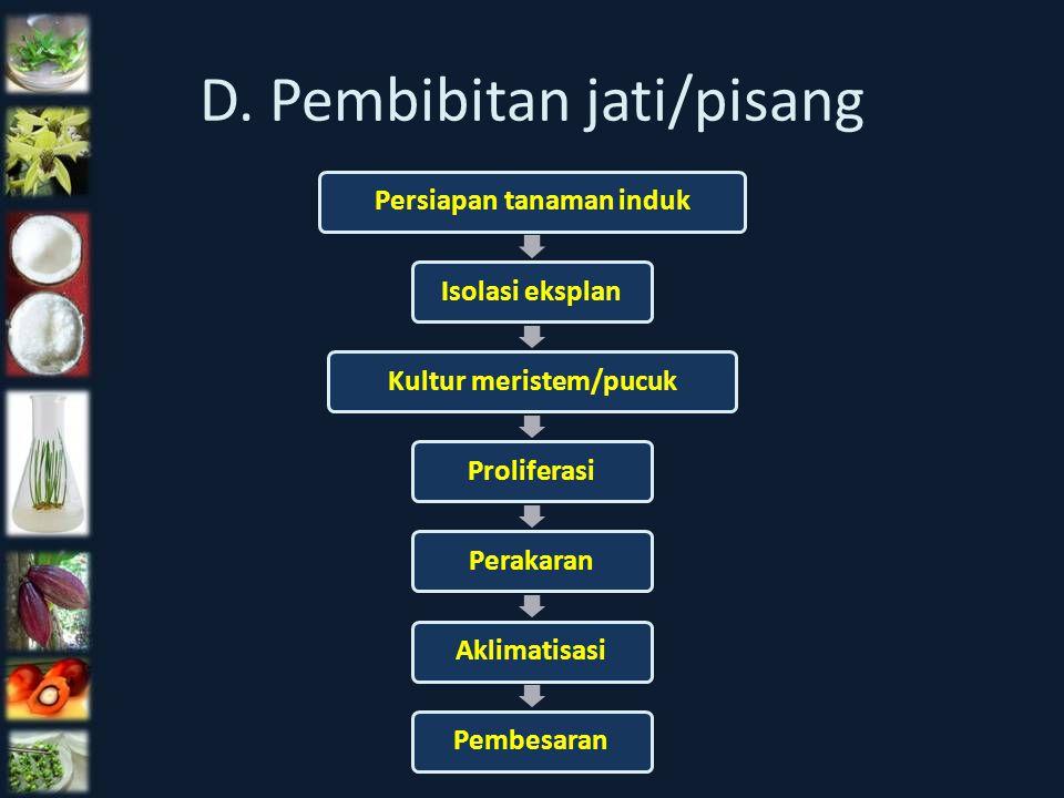 D. Pembibitan jati/pisang