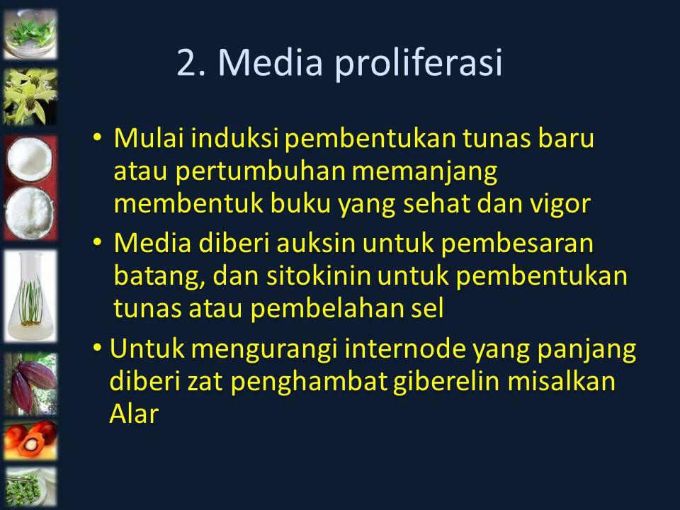 2. Media proliferasi Mulai induksi pembentukan tunas baru atau pertumbuhan memanjang membentuk buku yang sehat dan vigor.