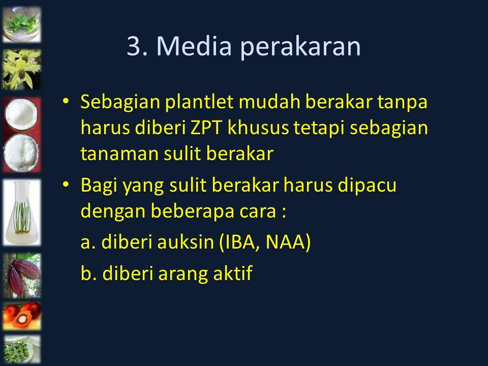 3. Media perakaran Sebagian plantlet mudah berakar tanpa harus diberi ZPT khusus tetapi sebagian tanaman sulit berakar.