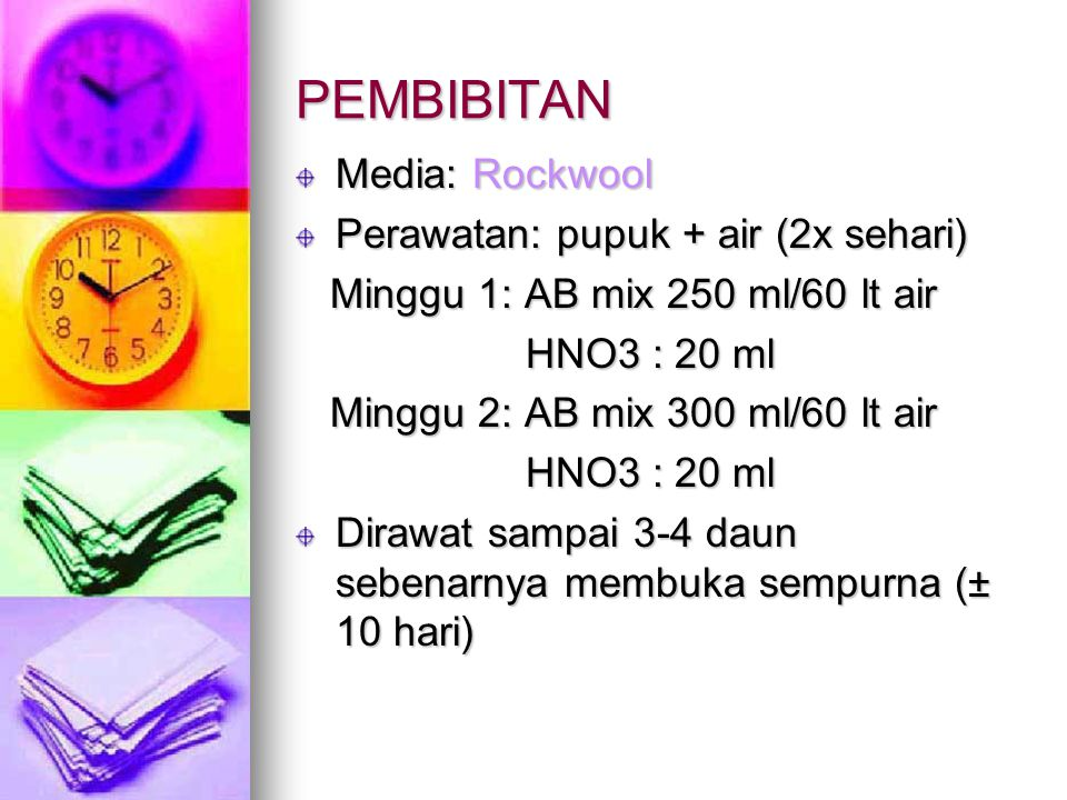 PEMBIBITAN Media: Rockwool Perawatan: pupuk + air (2x sehari)
