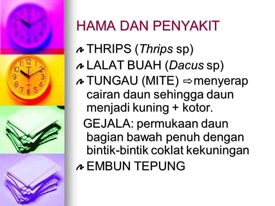 HAMA DAN PENYAKIT THRIPS (Thrips sp) LALAT BUAH (Dacus sp)