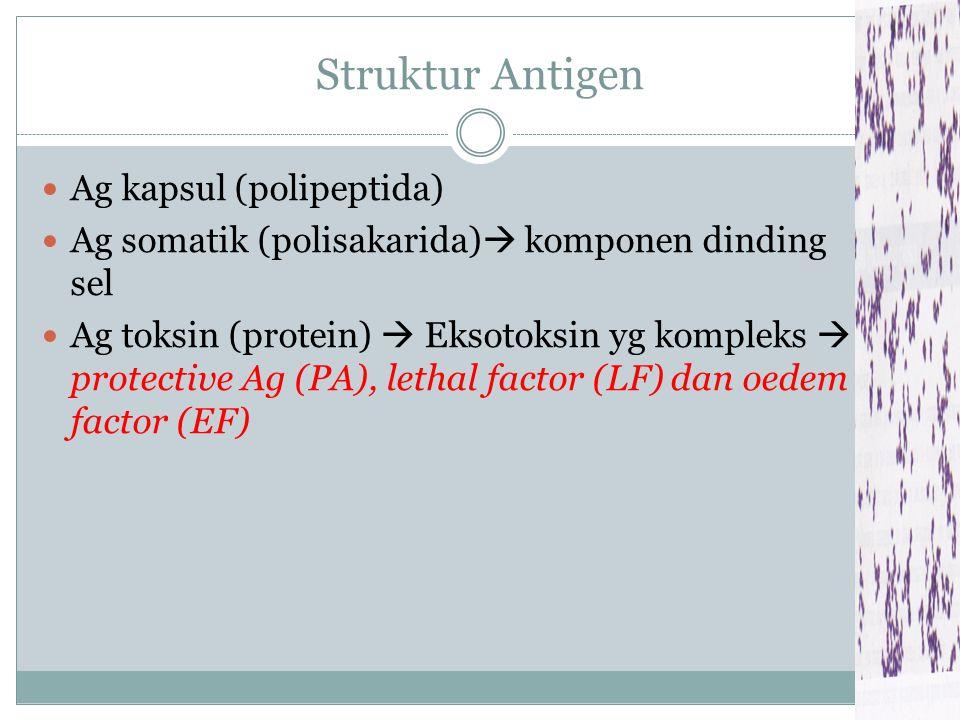 Struktur Antigen Ag kapsul (polipeptida)