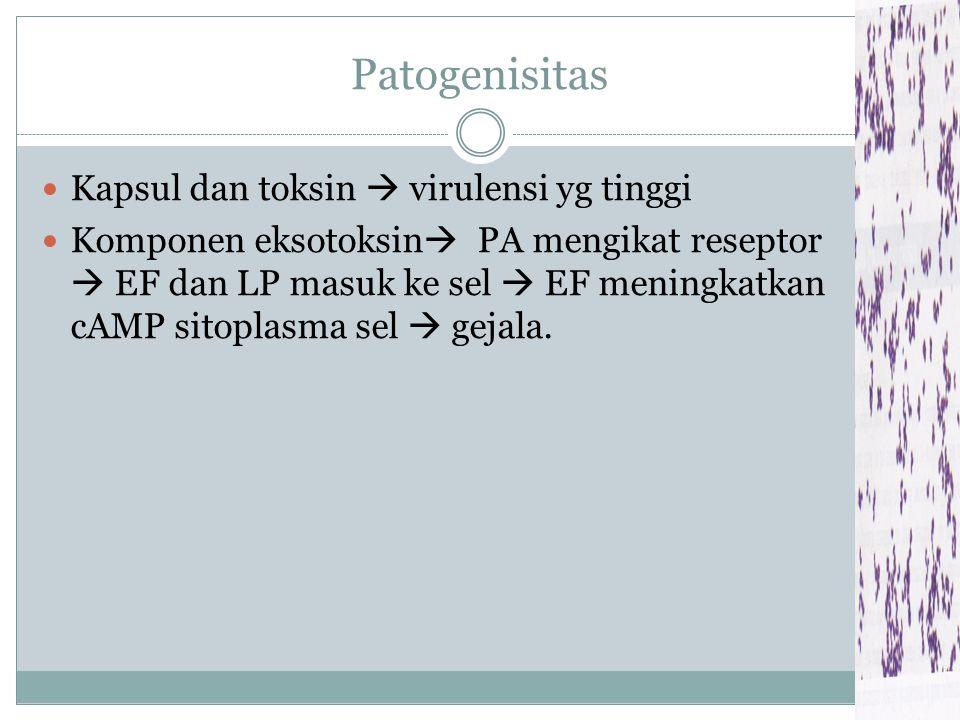 Patogenisitas Kapsul dan toksin  virulensi yg tinggi