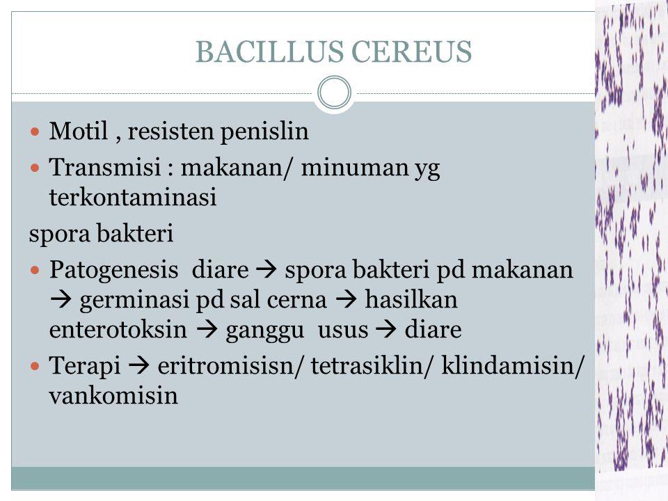 BACILLUS CEREUS Motil , resisten penislin