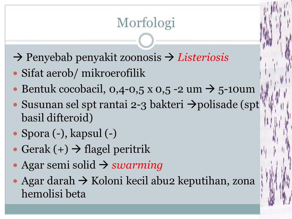 Morfologi  Penyebab penyakit zoonosis  Listeriosis
