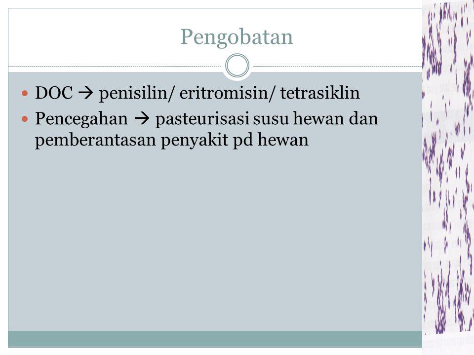 Pengobatan DOC  penisilin/ eritromisin/ tetrasiklin