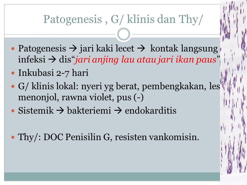 Patogenesis , G/ klinis dan Thy/