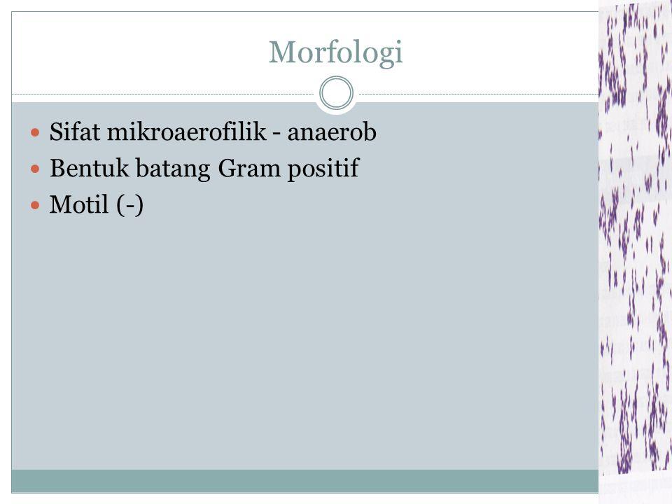 Morfologi Sifat mikroaerofilik - anaerob Bentuk batang Gram positif