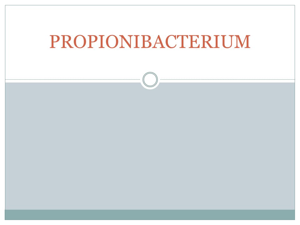 PROPIONIBACTERIUM