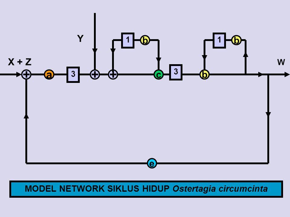 MODEL NETWORK SIKLUS HIDUP Ostertagia circumcinta