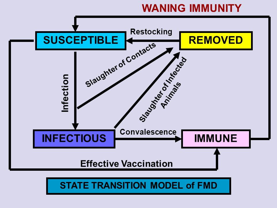 WANING IMMUNITY SUSCEPTIBLE REMOVED INFECTIOUS IMMUNE