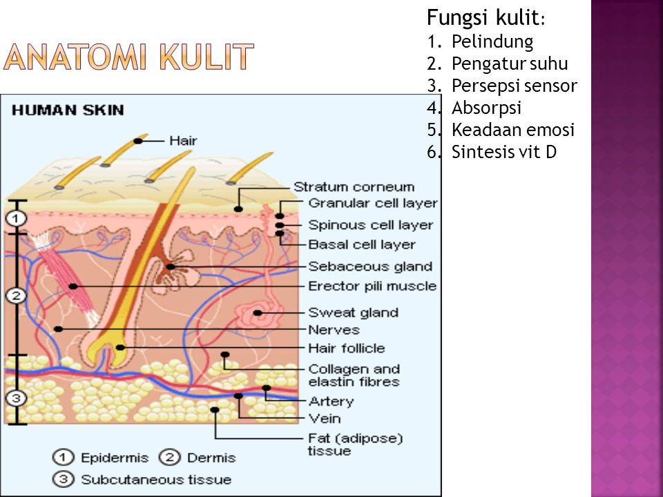 ANATOMI KULIT Fungsi kulit: Pelindung Pengatur suhu Persepsi sensor