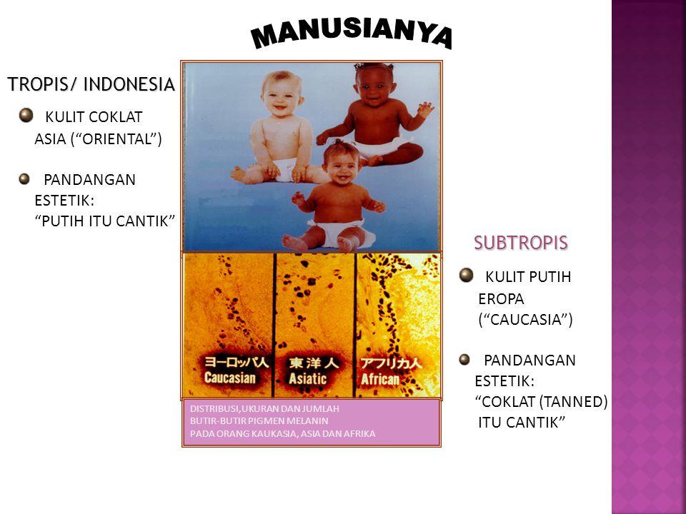 MANUSIANYA KULIT COKLAT KULIT PUTIH TROPIS/ INDONESIA SUBTROPIS