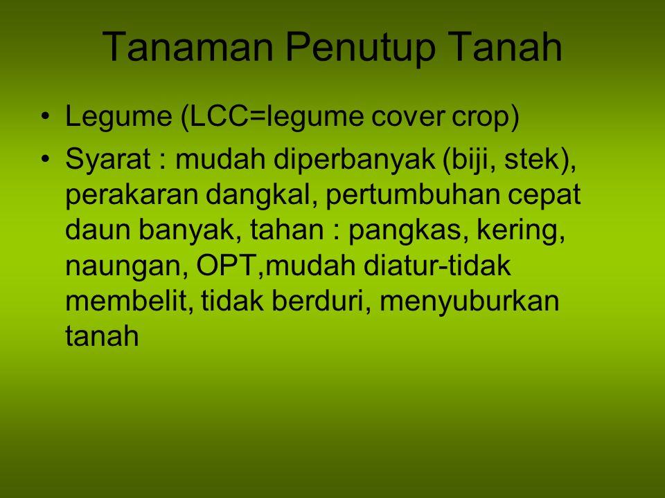Tanaman Penutup Tanah Legume (LCC=legume cover crop)