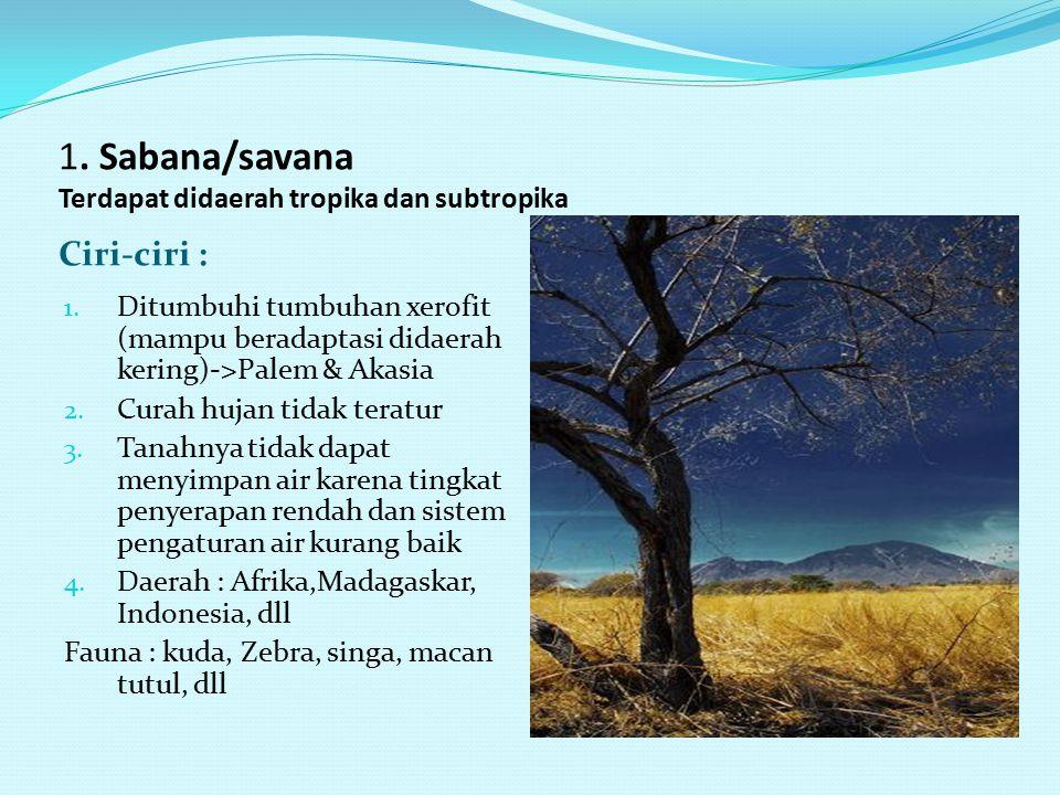1. Sabana/savana Terdapat didaerah tropika dan subtropika