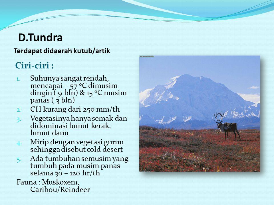 D.Tundra Terdapat didaerah kutub/artik