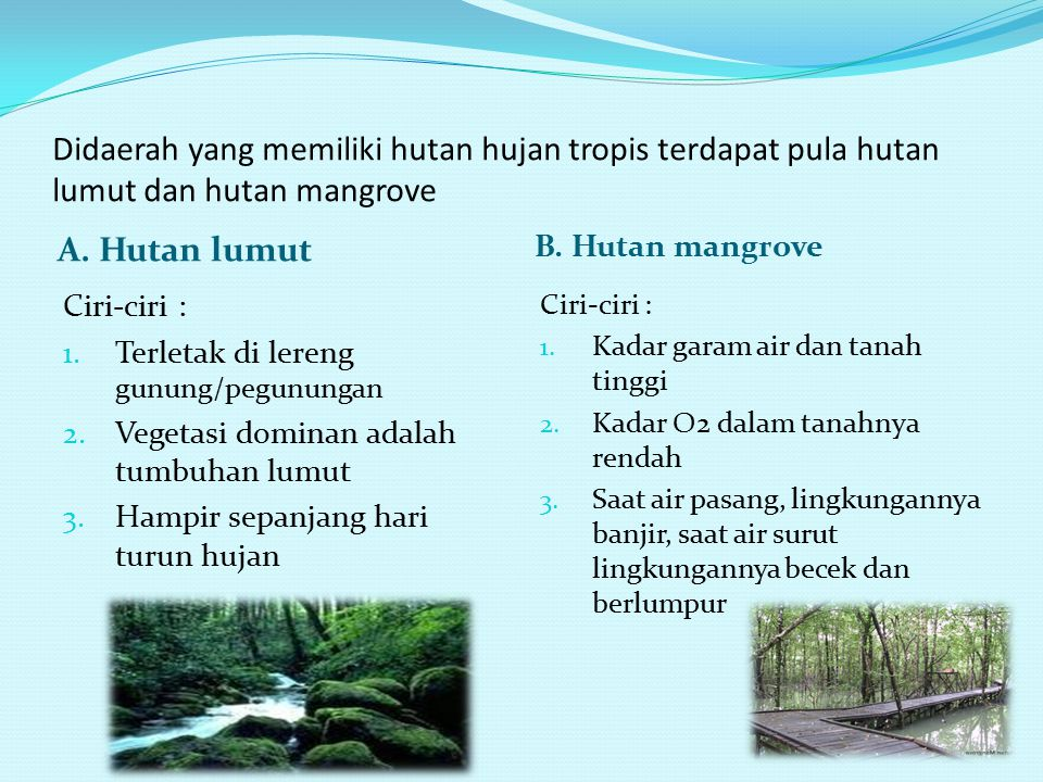 Didaerah yang memiliki hutan hujan tropis terdapat pula hutan lumut dan hutan mangrove