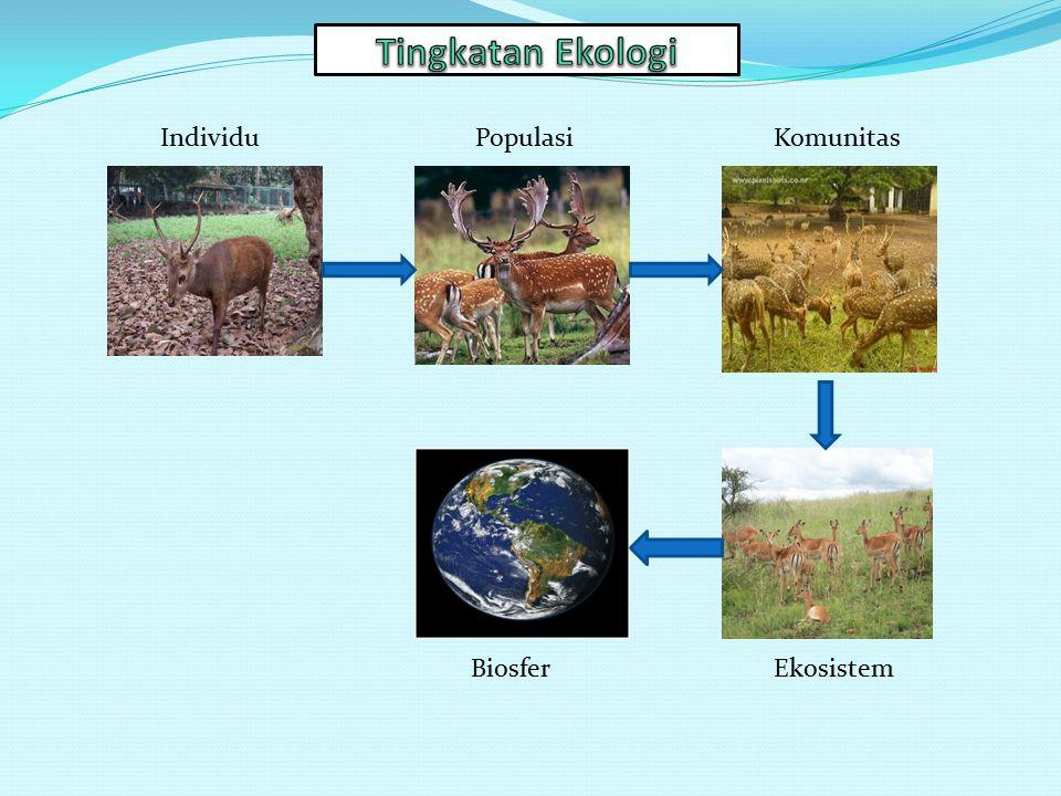 Tingkatan Ekologi Individu Populasi Komunitas Biosfer Ekosistem