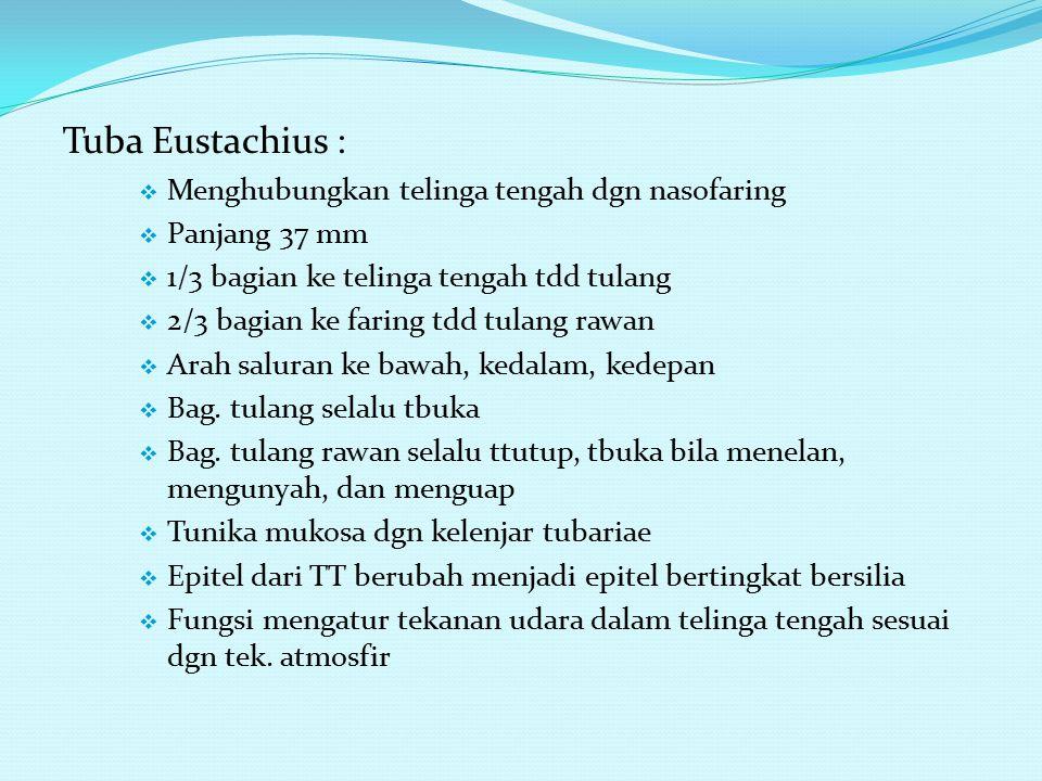 Tuba Eustachius : Menghubungkan telinga tengah dgn nasofaring