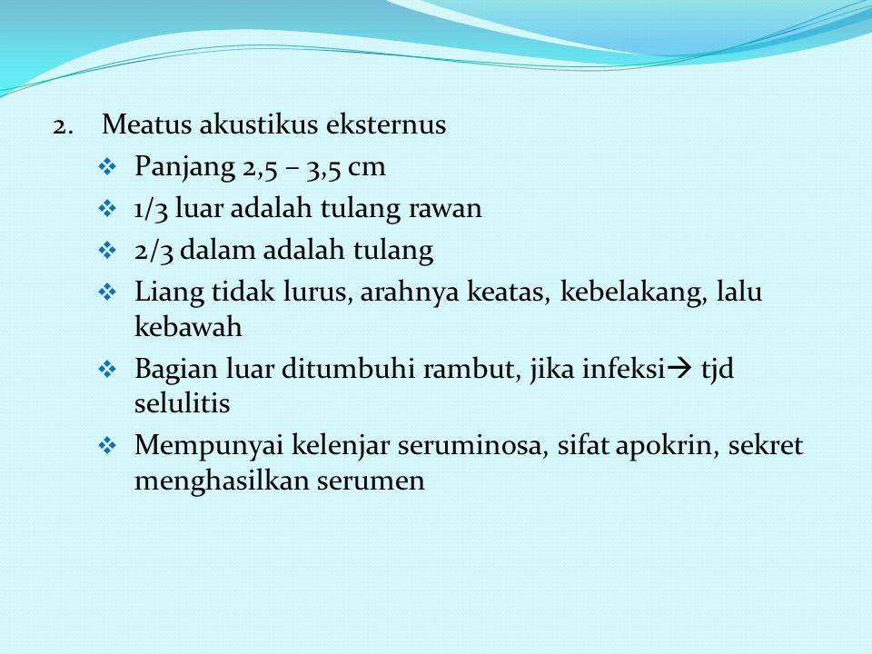 2. Meatus akustikus eksternus
