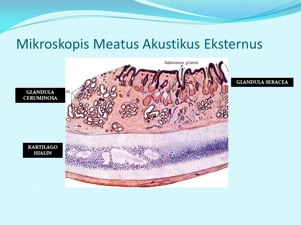 Mikroskopis Meatus Akustikus Eksternus