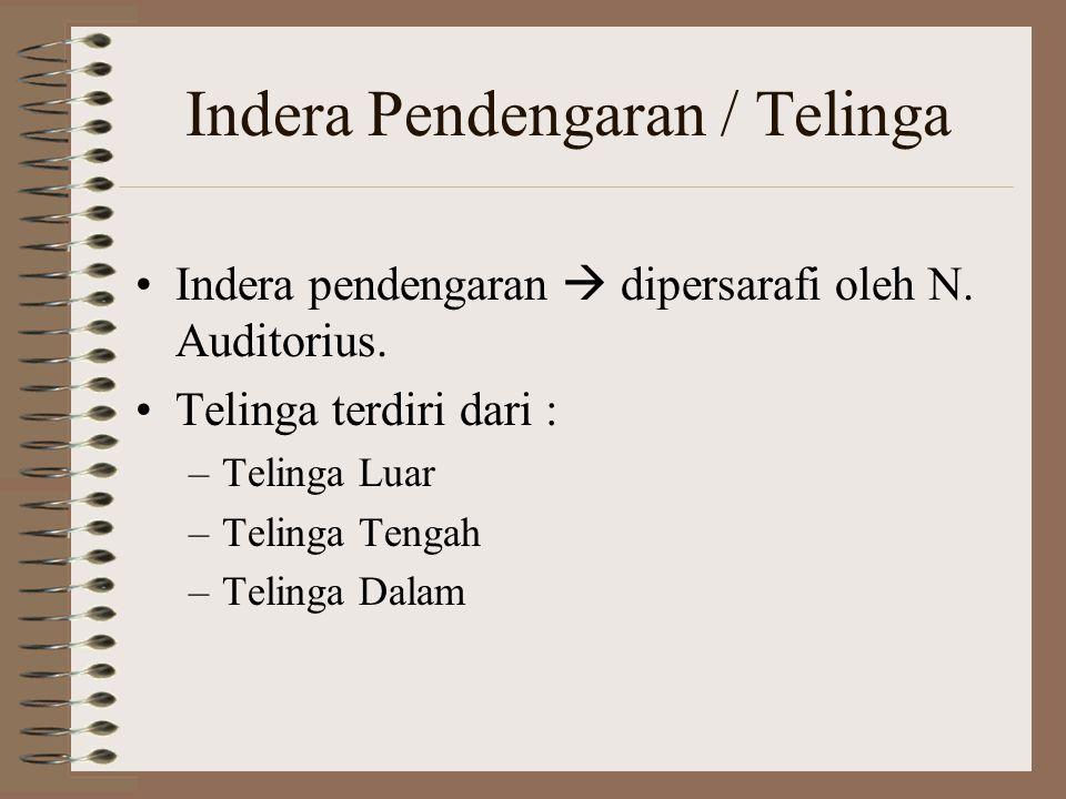 Indera Pendengaran / Telinga
