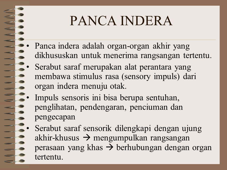 PANCA INDERA Panca indera adalah organ-organ akhir yang dikhususkan untuk menerima rangsangan tertentu.