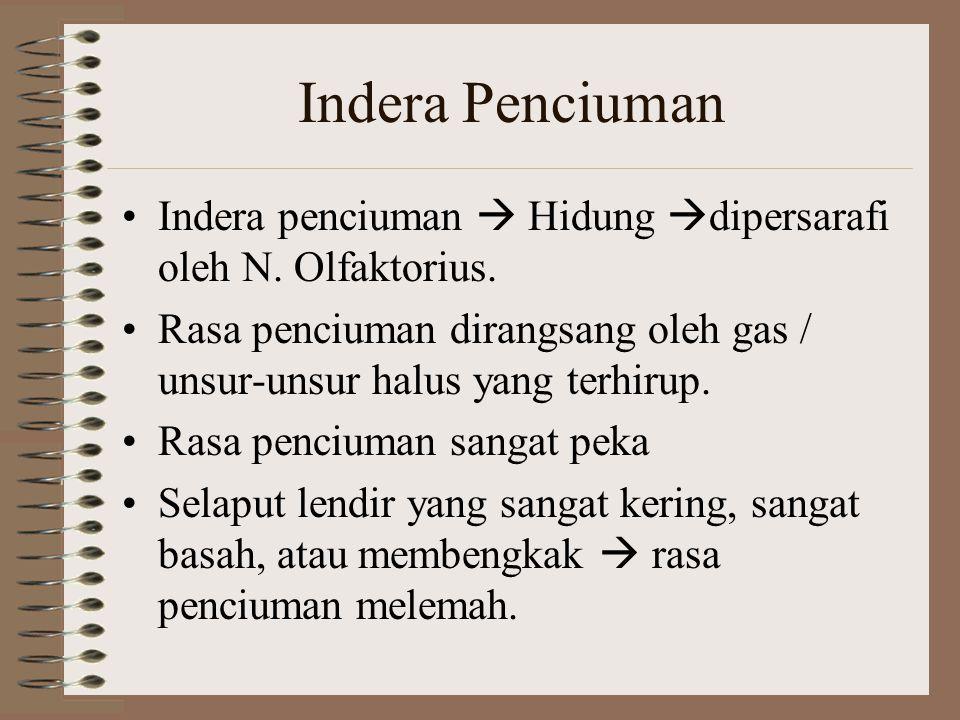 Indera Penciuman Indera penciuman  Hidung dipersarafi oleh N. Olfaktorius. Rasa penciuman dirangsang oleh gas / unsur-unsur halus yang terhirup.