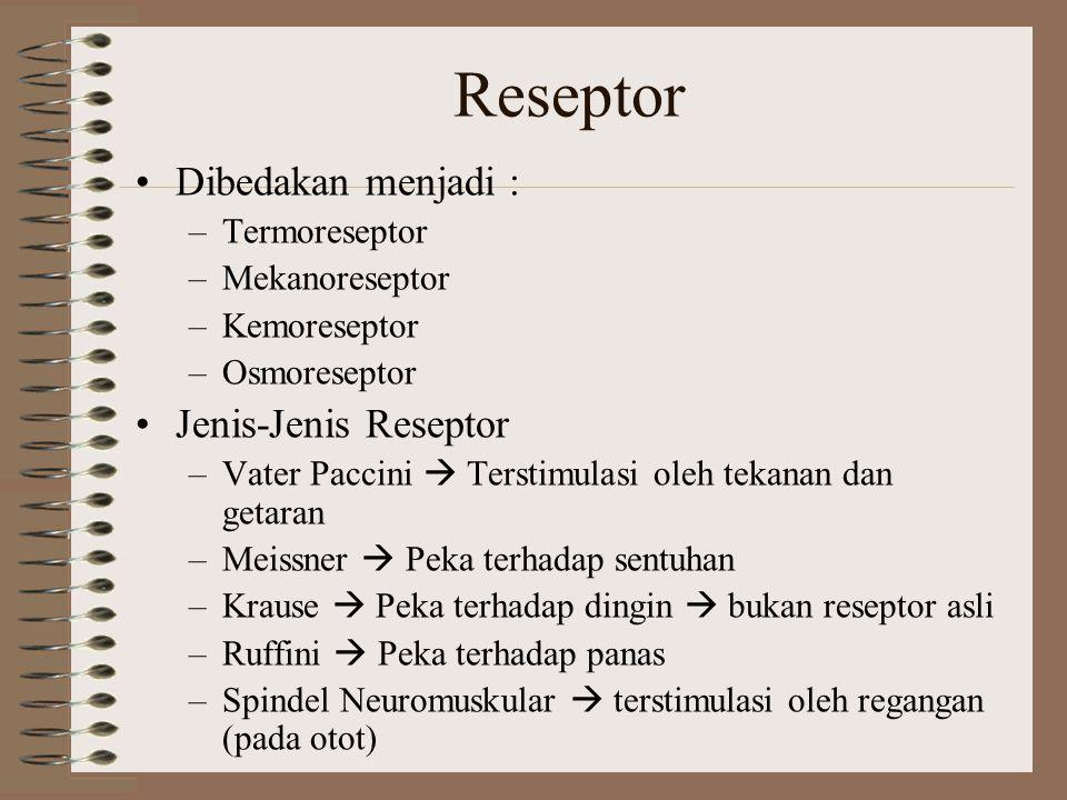Reseptor Dibedakan menjadi : Jenis-Jenis Reseptor Termoreseptor