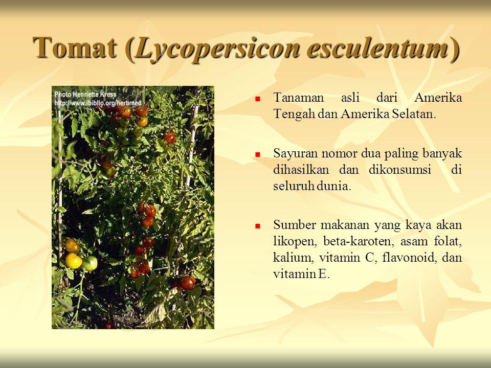 Tomat (Lycopersicon esculentum)