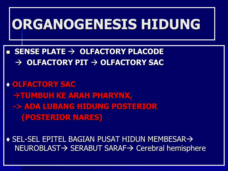 ORGANOGENESIS HIDUNG SENSE PLATE  OLFACTORY PLACODE