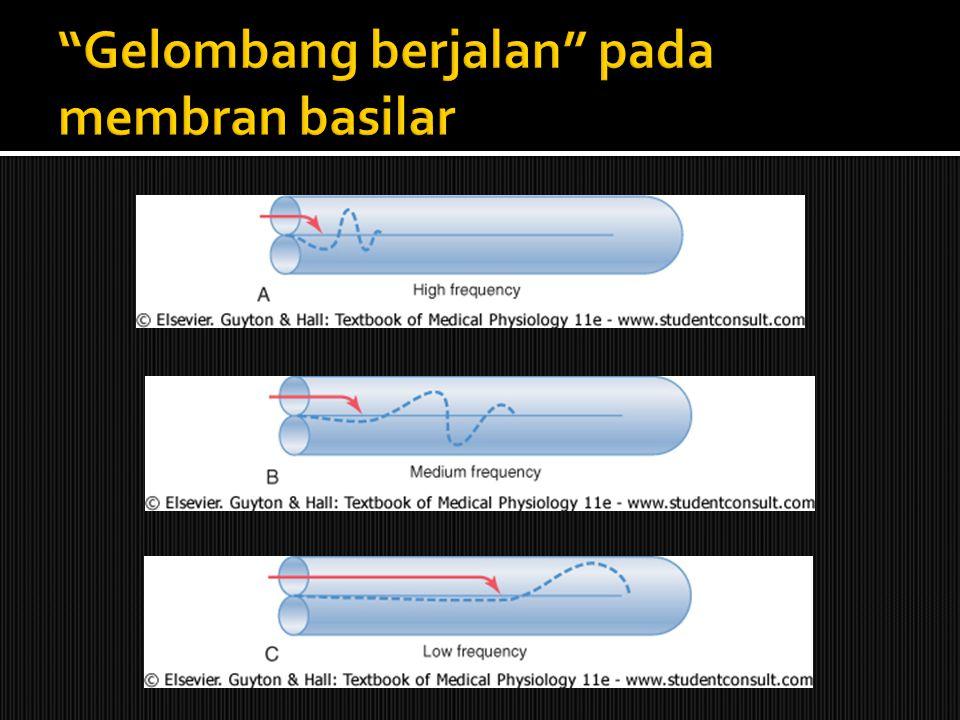 Gelombang berjalan pada membran basilar