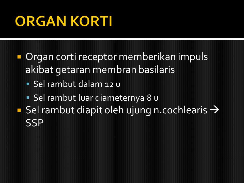 ORGAN KORTI Organ corti receptor memberikan impuls akibat getaran membran basilaris. Sel rambut dalam 12 u.