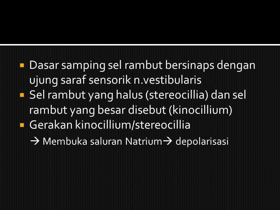 Gerakan kinocillium/stereocillia