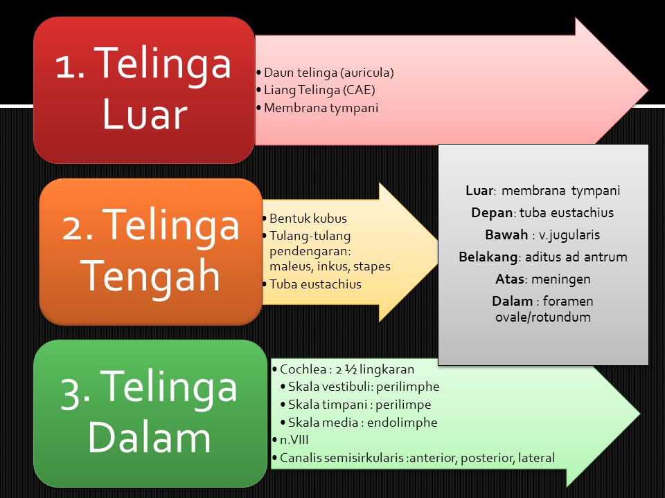 Luar: membrana tympani Depan: tuba eustachius Bawah : v.jugularis