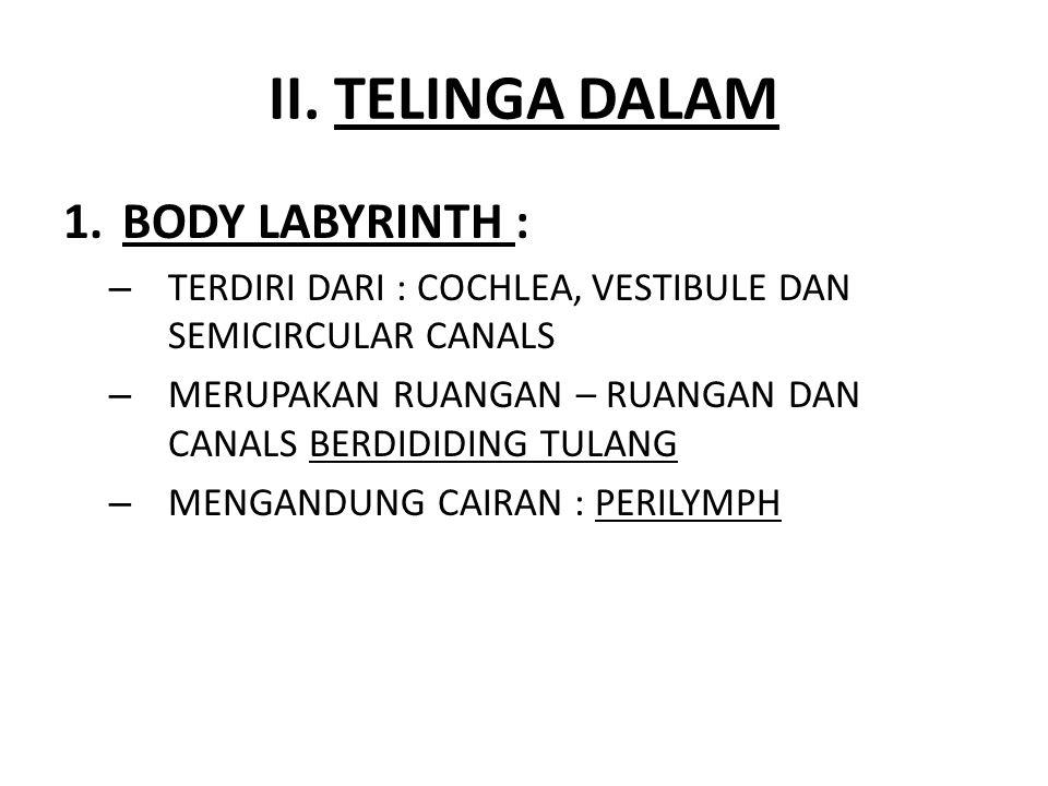 II. TELINGA DALAM BODY LABYRINTH :