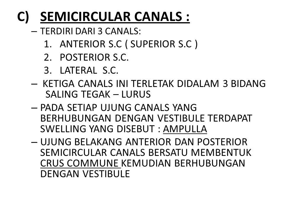 SEMICIRCULAR CANALS : ANTERIOR S.C ( SUPERIOR S.C ) POSTERIOR S.C.