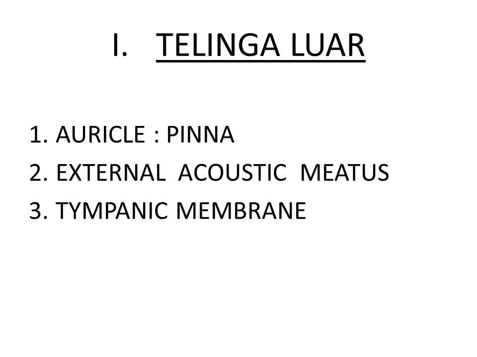 TELINGA LUAR AURICLE : PINNA EXTERNAL ACOUSTIC MEATUS