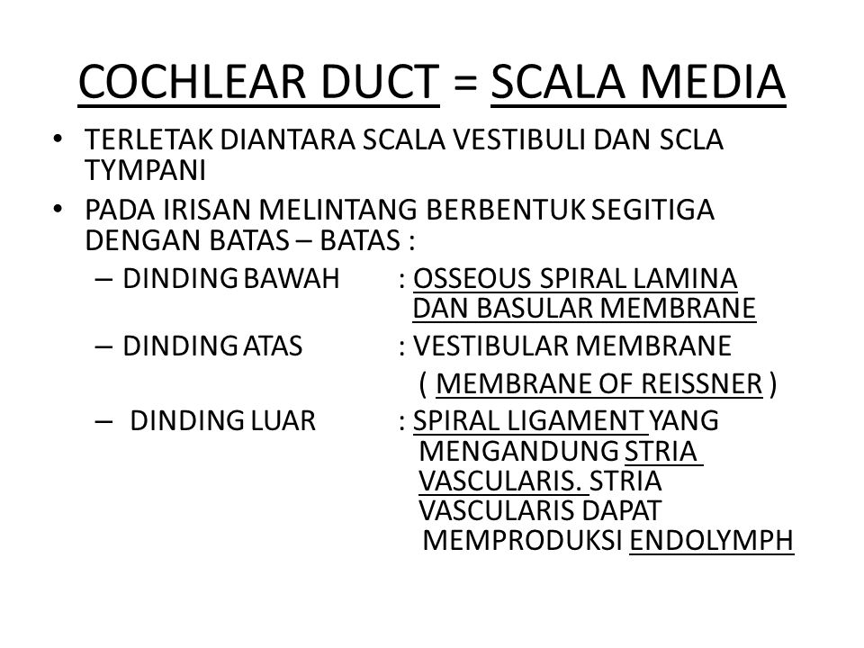 COCHLEAR DUCT = SCALA MEDIA