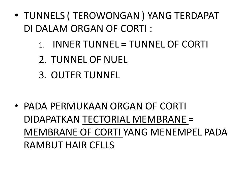 TUNNELS ( TEROWONGAN ) YANG TERDAPAT DI DALAM ORGAN OF CORTI :