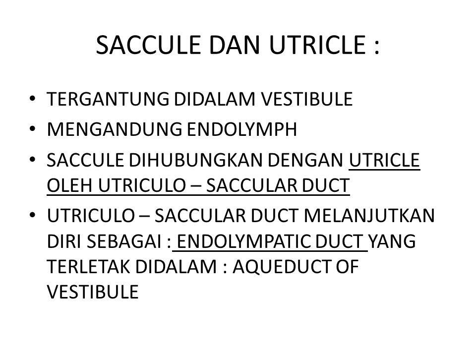 SACCULE DAN UTRICLE : TERGANTUNG DIDALAM VESTIBULE