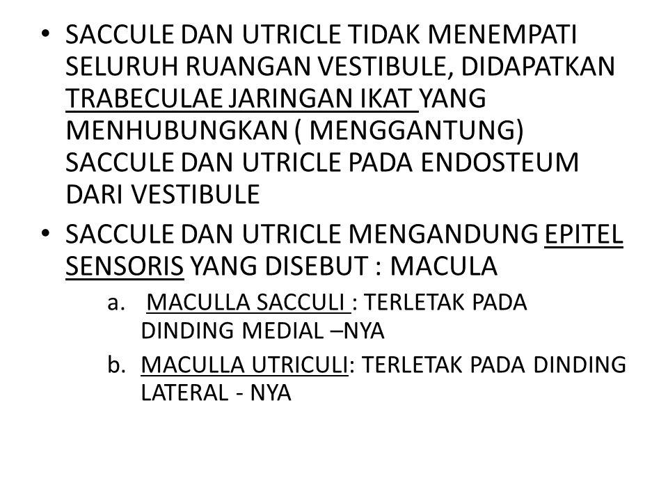 SACCULE DAN UTRICLE MENGANDUNG EPITEL SENSORIS YANG DISEBUT : MACULA