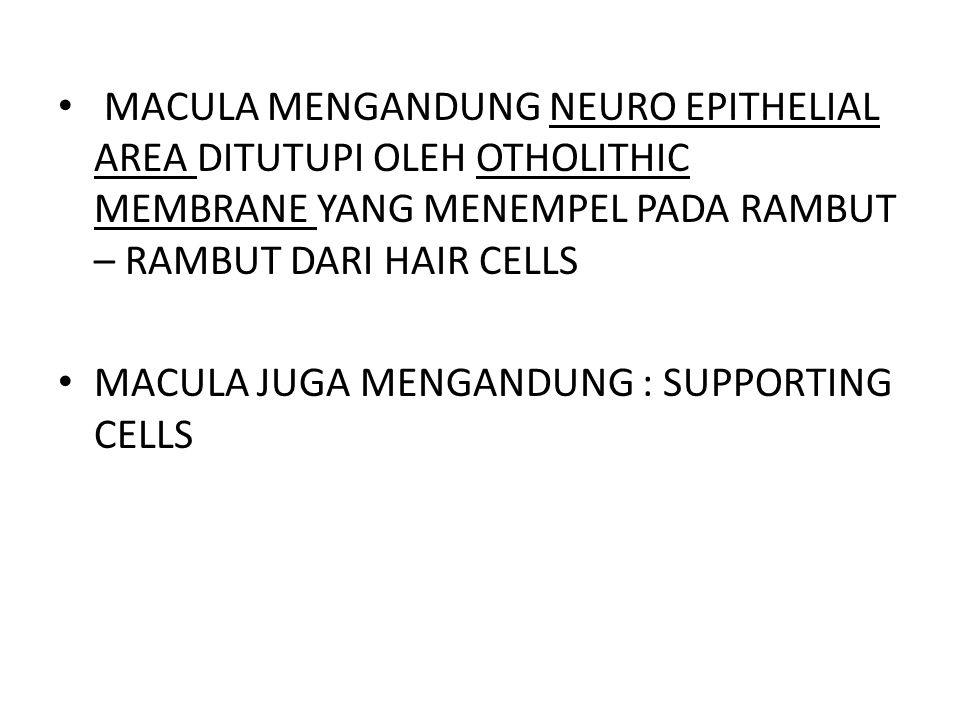 MACULA MENGANDUNG NEURO EPITHELIAL AREA DITUTUPI OLEH OTHOLITHIC MEMBRANE YANG MENEMPEL PADA RAMBUT – RAMBUT DARI HAIR CELLS