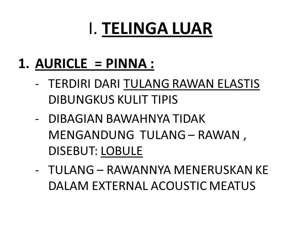 I. TELINGA LUAR AURICLE = PINNA :