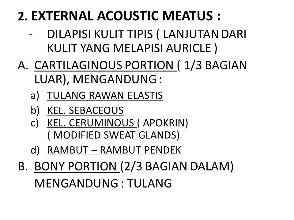 2. EXTERNAL ACOUSTIC MEATUS :