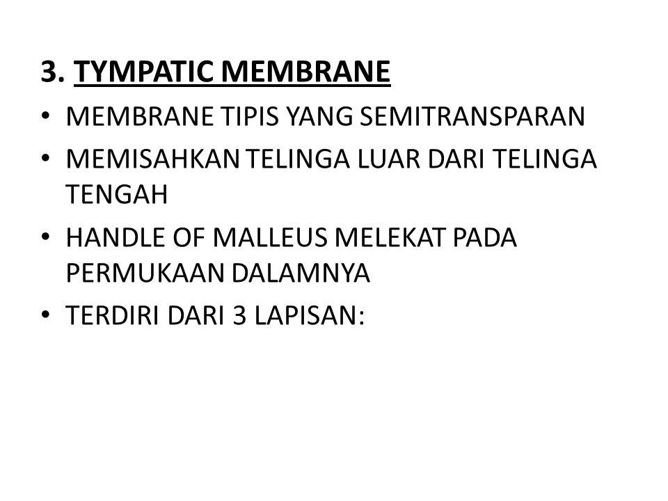 3. TYMPATIC MEMBRANE MEMBRANE TIPIS YANG SEMITRANSPARAN